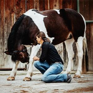 Bewegungstherapie Pferd300x300
