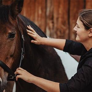 Faszie Pferd300x300